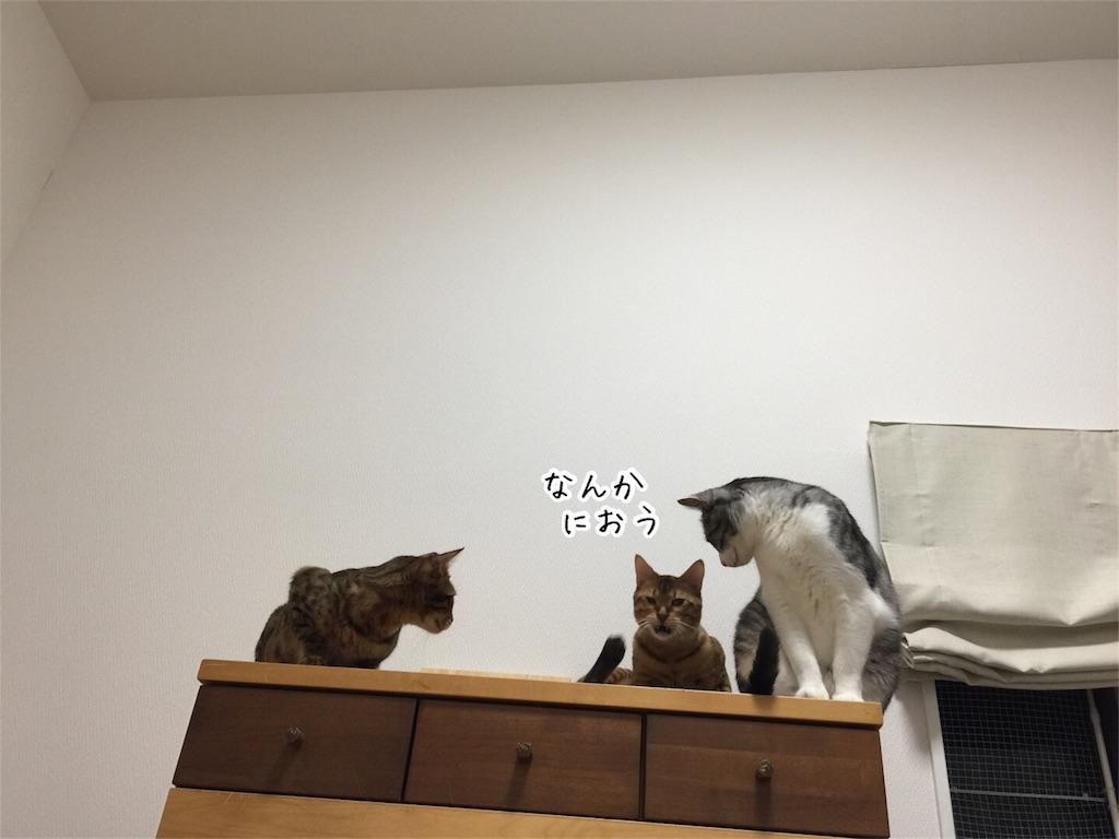 f:id:kotaro-nyan:20161010203029j:image