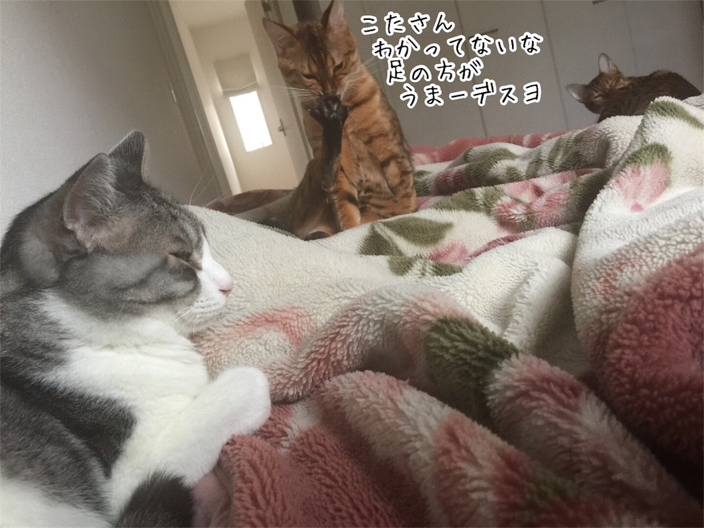 f:id:kotaro-nyan:20161011074826j:image