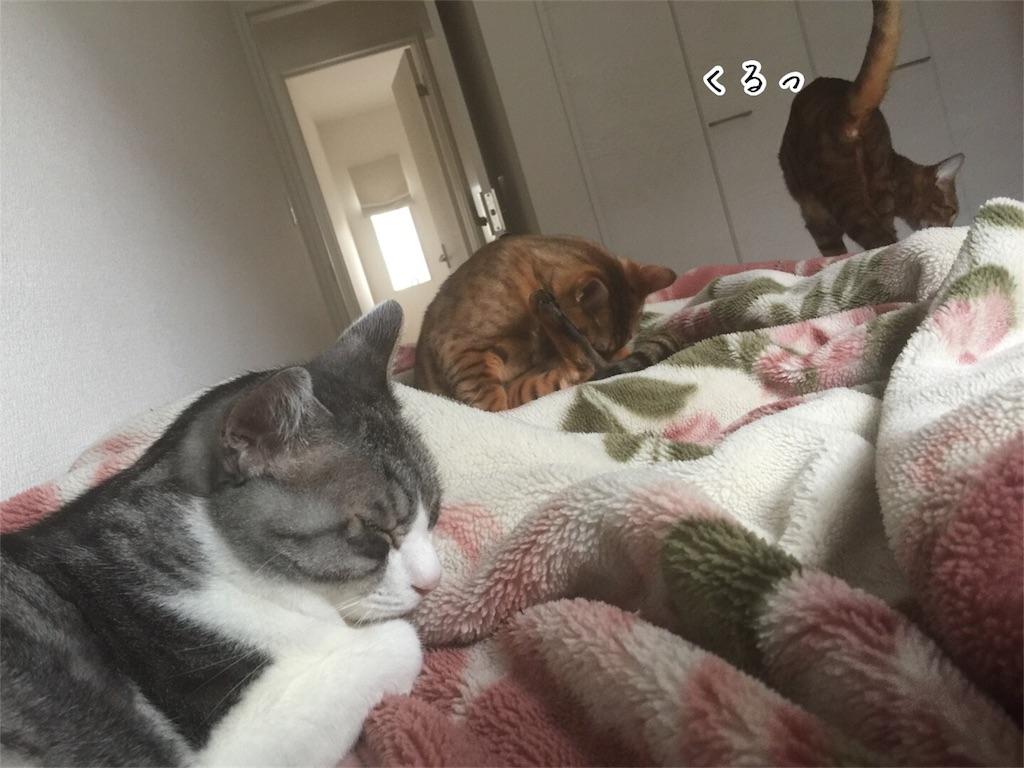 f:id:kotaro-nyan:20161011075112j:image