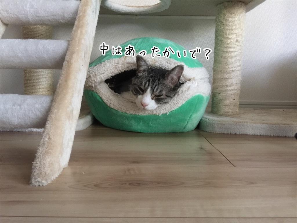 f:id:kotaro-nyan:20161108082121j:image