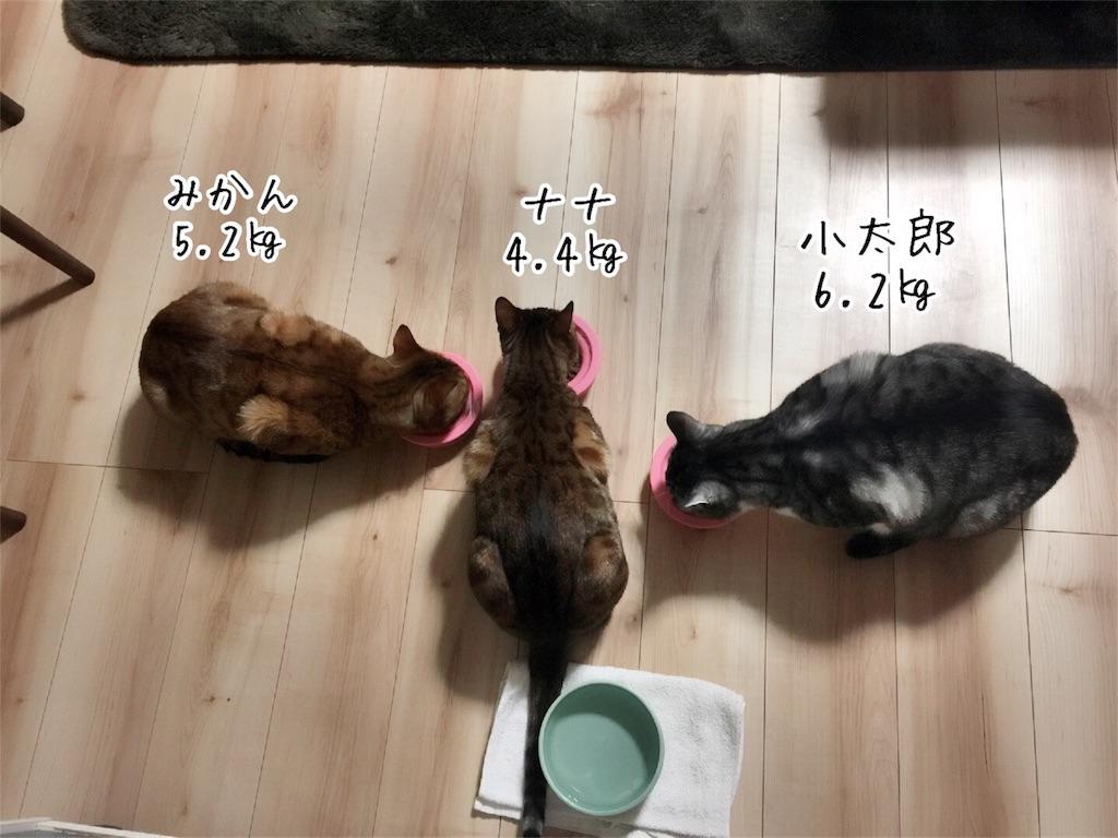 f:id:kotaro-nyan:20161213202404j:image