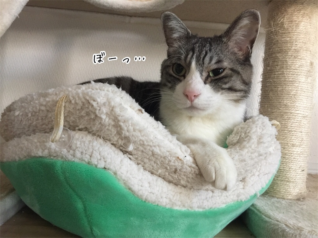 f:id:kotaro-nyan:20170324132214j:image