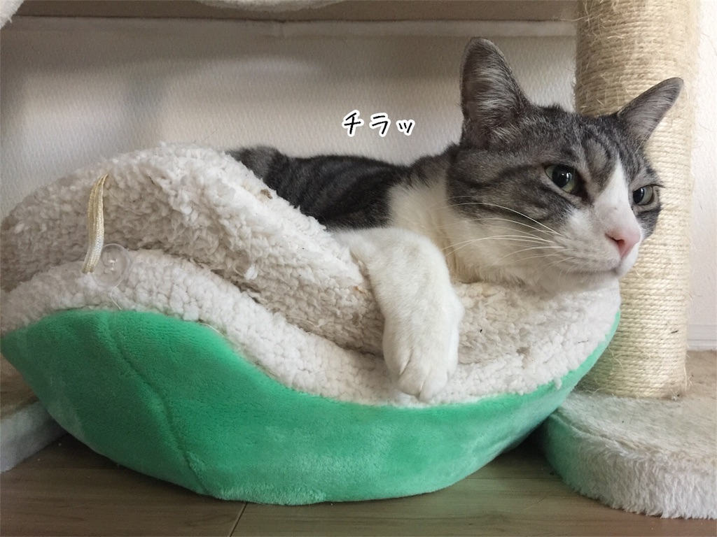 f:id:kotaro-nyan:20170324132525j:image