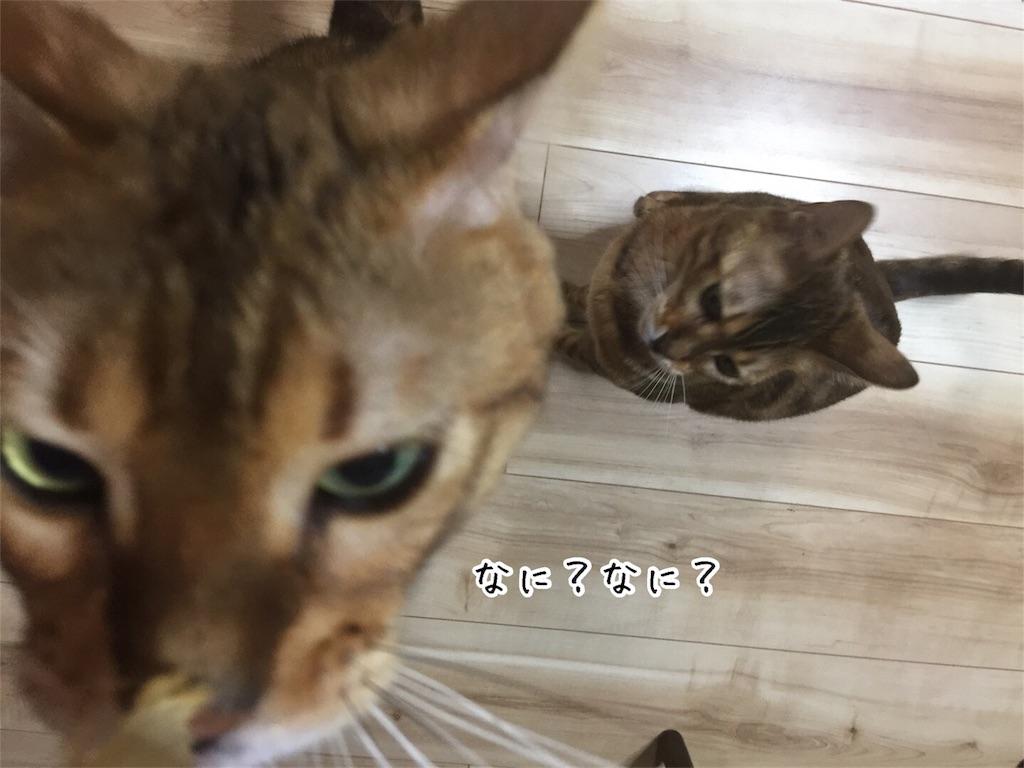 f:id:kotaro-nyan:20170530212934j:image