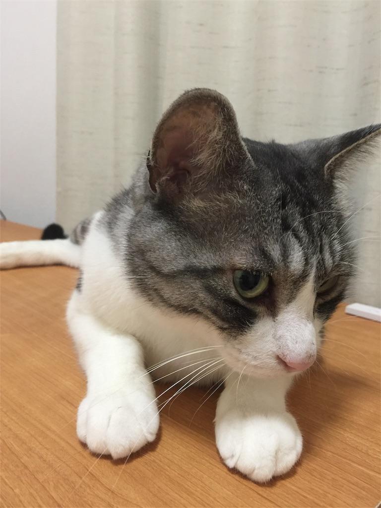 f:id:kotaro-nyan:20170607215614j:image