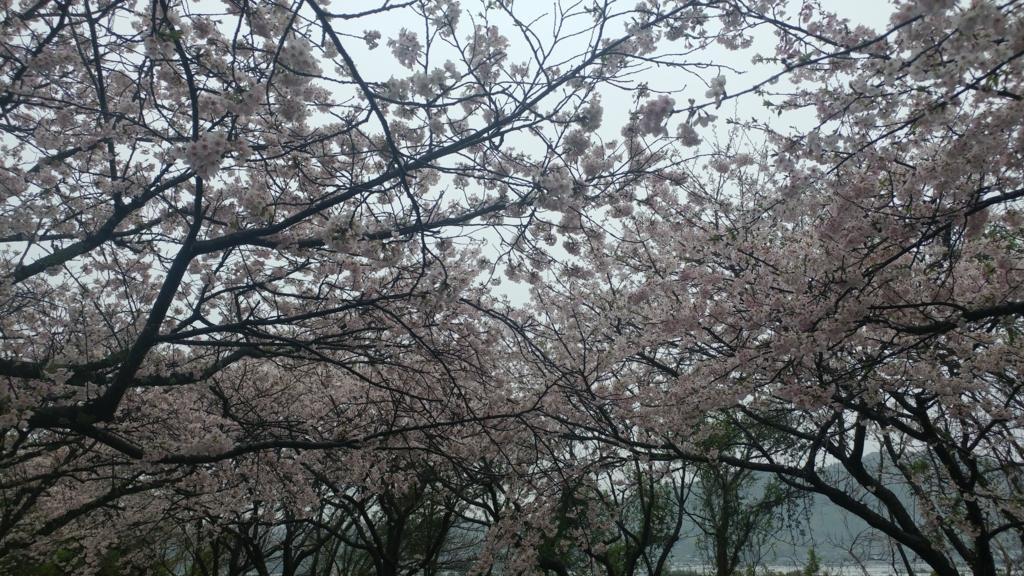 f:id:kotaroujapan:20170412155517j:plain