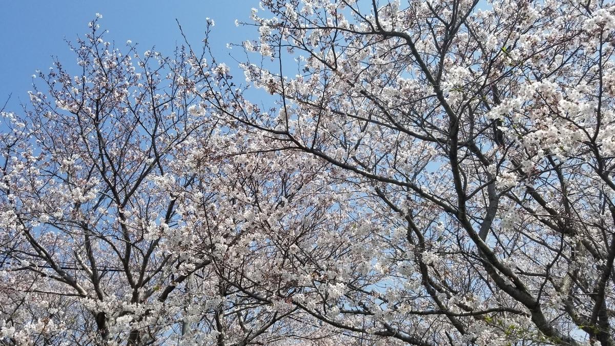 f:id:kotaroujapan:20190406215214j:plain