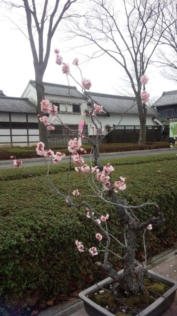 f:id:kotatsumama:20180310223552j:plain
