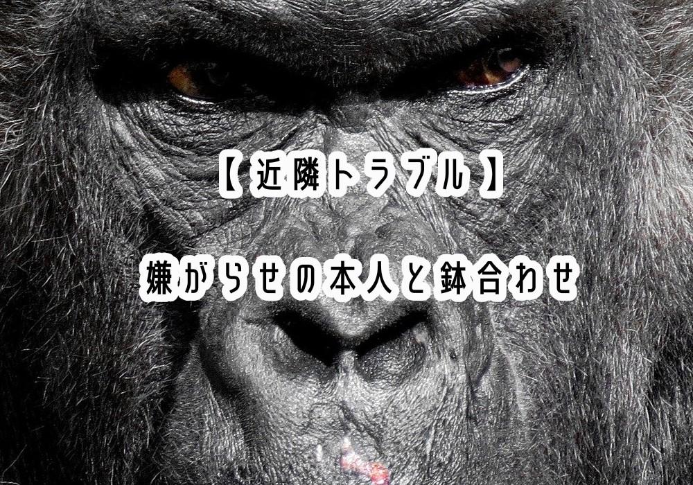 f:id:kotechama:20200525152827j:image