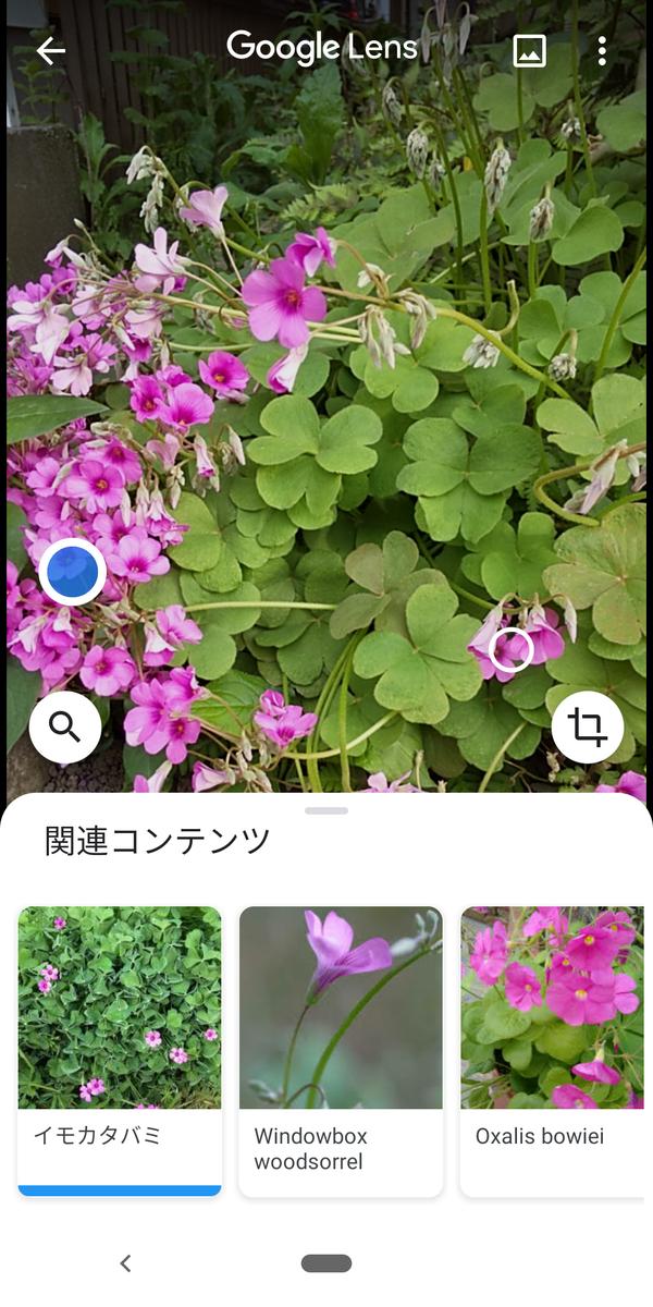 f:id:kotiqsai:20200513195000p:plain