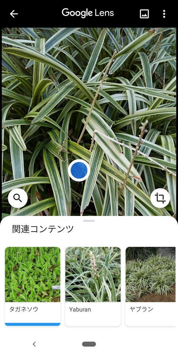 f:id:kotiqsai:20200514192316p:plain