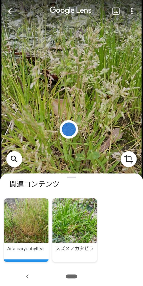 f:id:kotiqsai:20200515125455p:plain