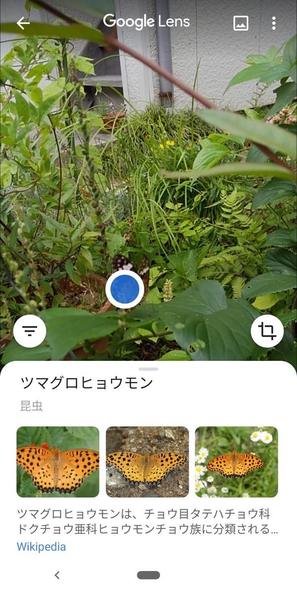 f:id:kotiqsai:20200924103426j:plain