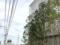 今日のApple横浜2