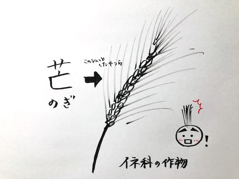f:id:koto_no_ha_writing:20200605182555j:plain
