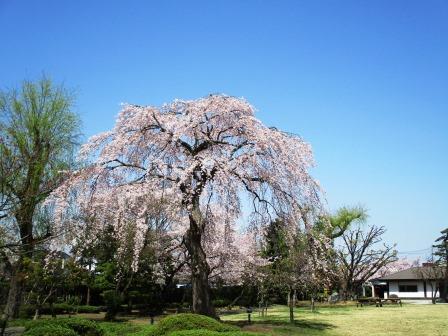 藤田記念庭園は弘前公園そばで桜が美しい