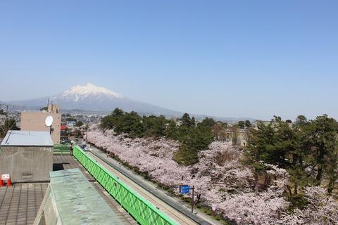 弘前さくらまつりは4月20の開花予想