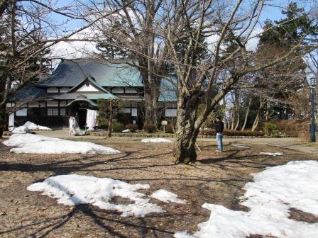 弘前公園のマルバマンサクが咲くと40日後に桜が咲く