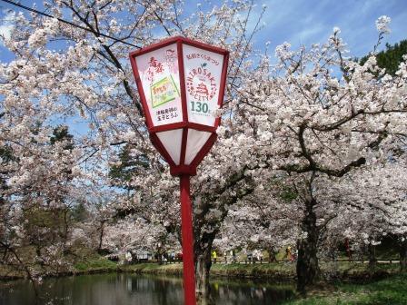 桜・弘前公園