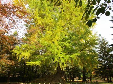 弘前公園・紅葉