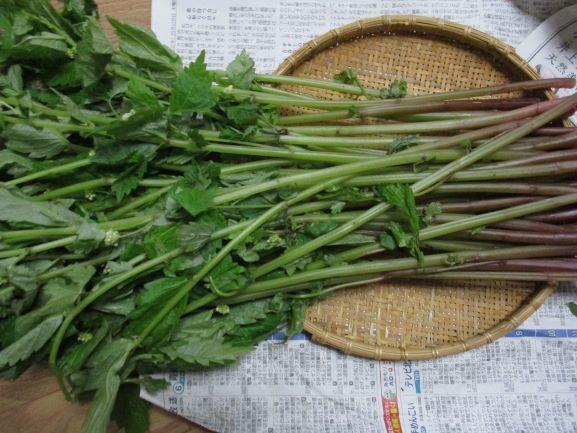 ミズ・山菜