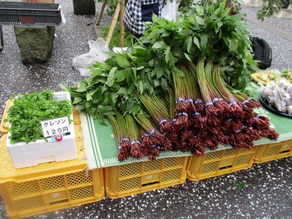 山菜のミズ・郷土料理
