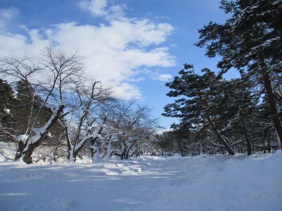 弘前公園・桜の開花予想