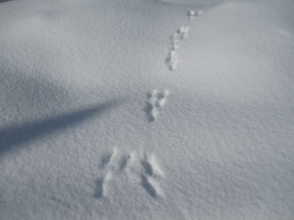雪道・転倒注意