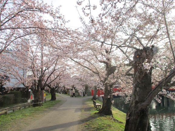 桜のトンネル・弘前さくらまつり2021