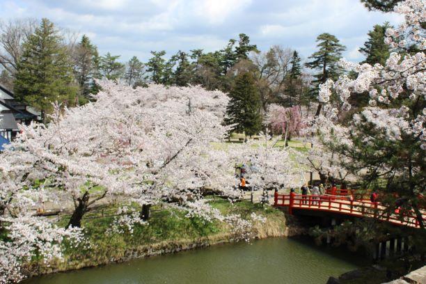 弘前公園・桜満開