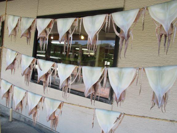 イカのカーテン