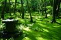 京都新聞写真コンテスト 緑の庭