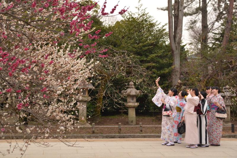 京都新聞写真コンテスト 花より自撮り