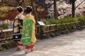 京都新聞写真コンテスト 舞妓さんが通る