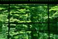 京都新聞写真コンテスト 緑の世界