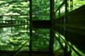 京都新聞写真コンテスト 床新緑