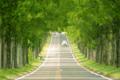 京都新聞写真コンテスト 緑のトンネル