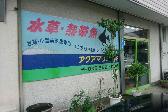 f:id:kotori11:20170711220036j:image
