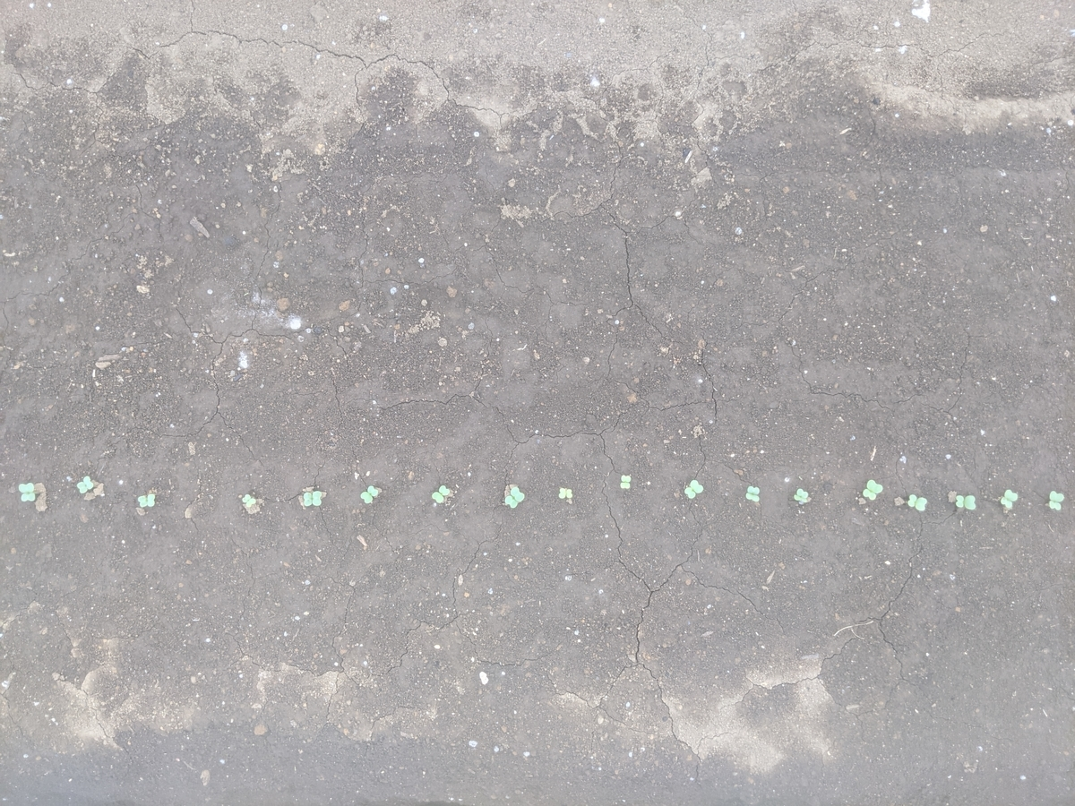 f:id:kotori325:20210405152339j:plain