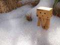 [ダンボー][雪]