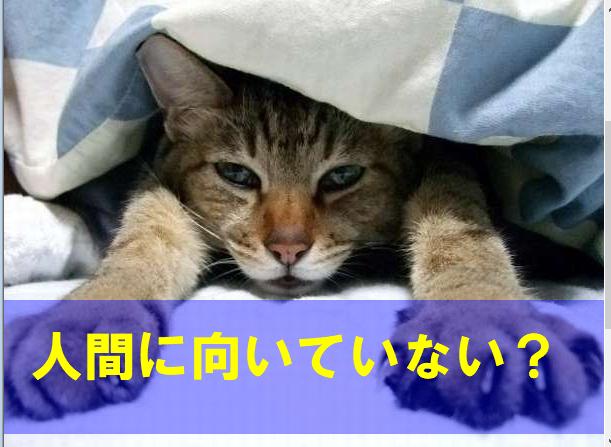 f:id:kotorin6:20180907100309p:plain