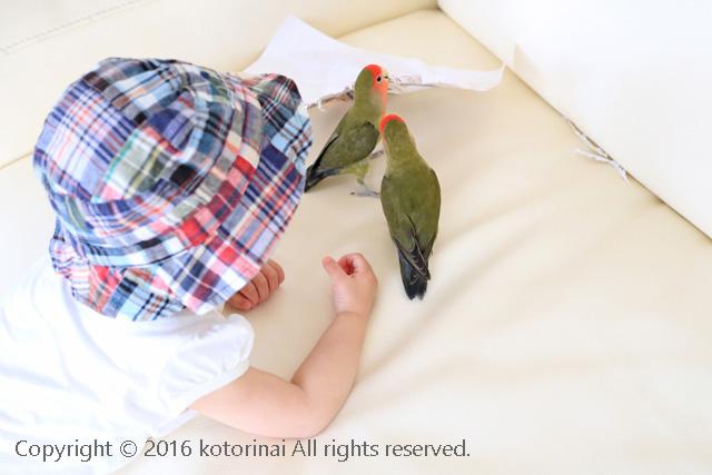 f:id:kotorinai:20160508210625j:plain