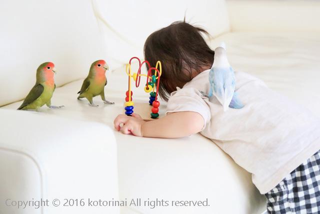 f:id:kotorinai:20160724225627j:plain