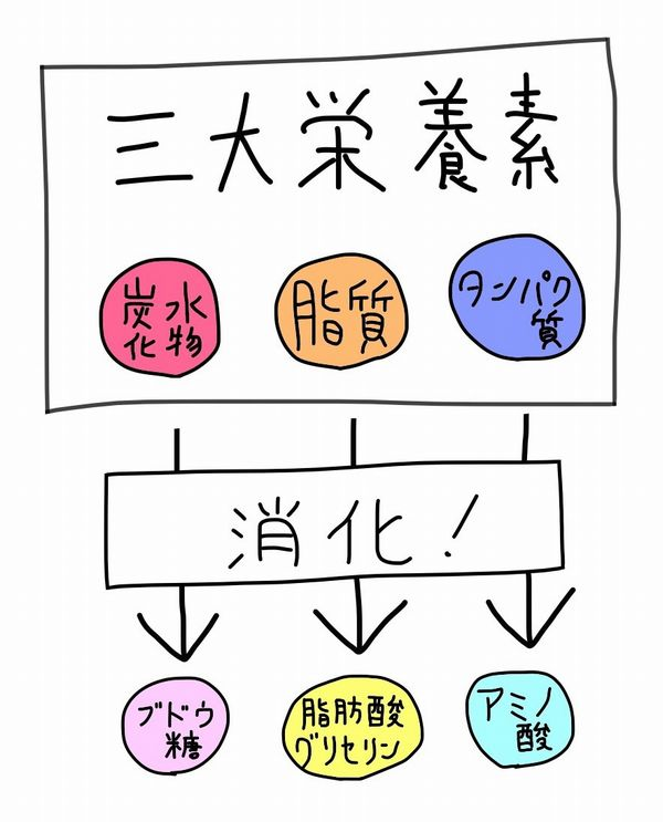 f:id:kotosanagi:20151013212816j:plain