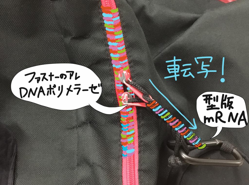 f:id:kotosanagi:20170214211238p:plain:w450