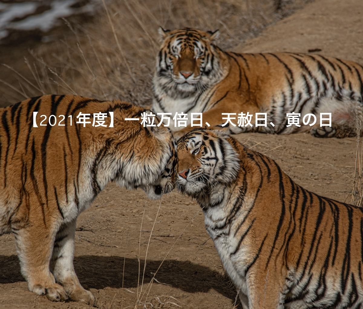 f:id:kotsukotsu_tocchi:20210330154404j:plain