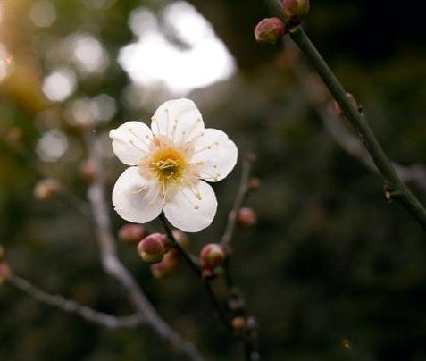 f:id:kotsukotsu_tocchi:20210331155129j:plain