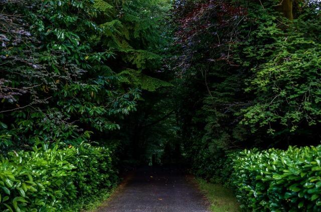 夢占い 森の夢