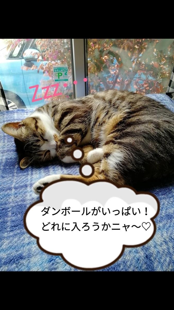 f:id:kotubutubu3253:20200102202646j:plain