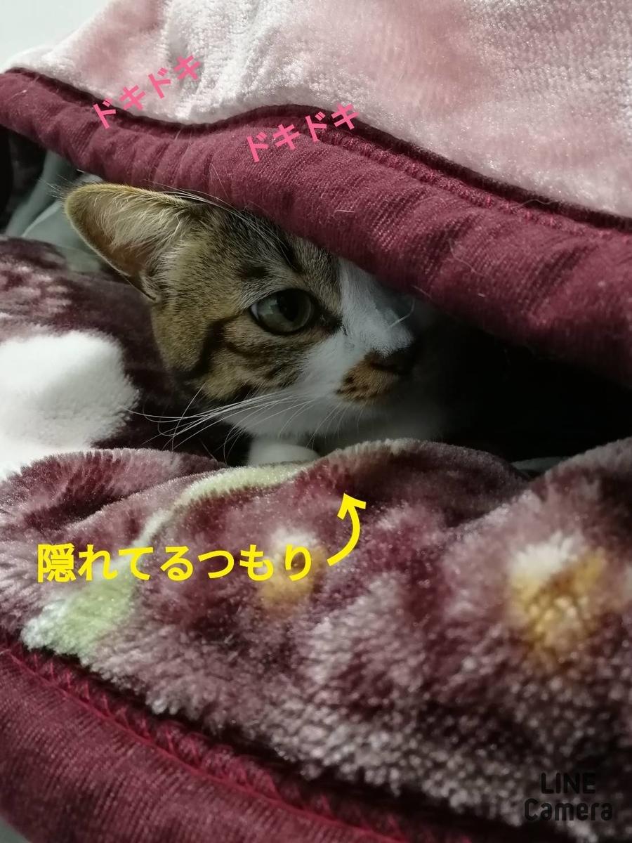 f:id:kotubutubu3253:20200116062047j:plain